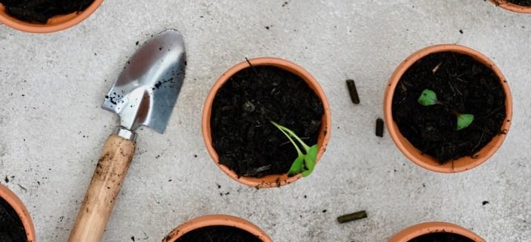 Mein Gartenjahr 2019: Anbaukalender April & das erste Umtopfen