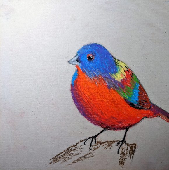Painted bunting. Soft pastel, paper.