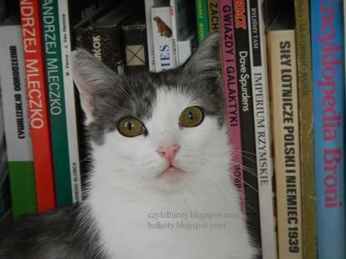 koty oczka2