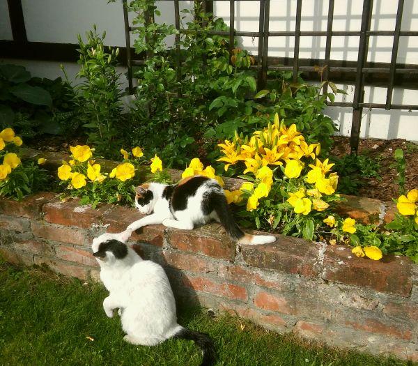 zakole gzin koty