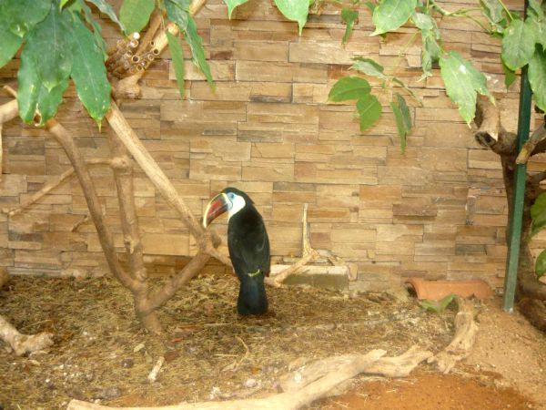 zoološki vrt atina