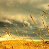 Beautiful, Summer, hayfield