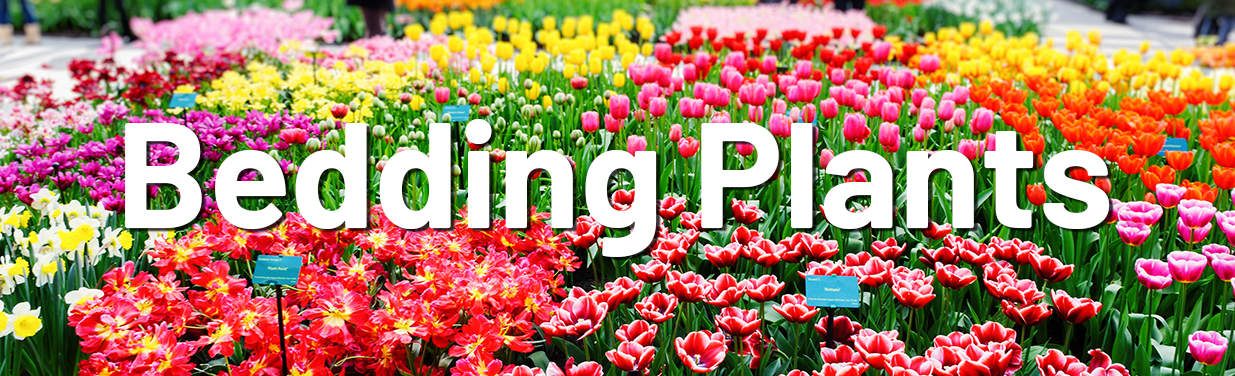 Bedding plants header