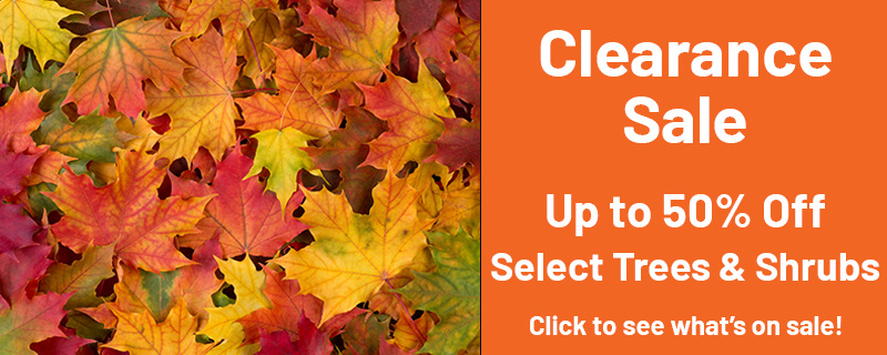 Clearance Sale Up to 50% Off Select Trees & Shrubs Click to see what's on sale!