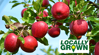 Locally grown fruit trees