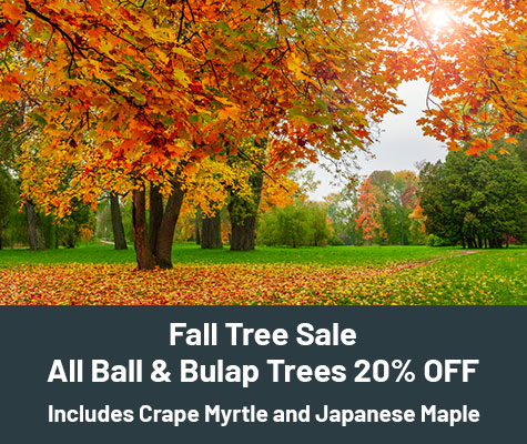 Fall Tree Sale. All Ball & Burlap Trees 20% OFF. Includes Crape Myrtle and Japanese Maple.