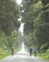 A great bike ride through the rainforest - Great Bike Tours