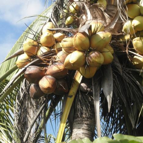 Teff Coconut Buckwheat Bread with Chia & Sesame Seeds