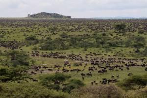 namiri-plains-koptjie-wildbeste-ninian-lowis-lowis-leakey-mr
