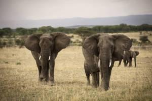 olakira-camp-elephants-eliza-deacon