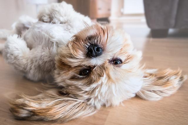 Best Broom For Dog Hair On Hardwood Floors