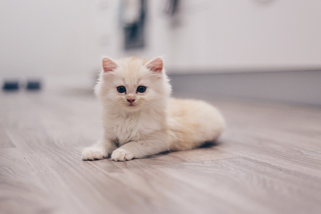 How To Remove Cat Urine From Laminate Floor