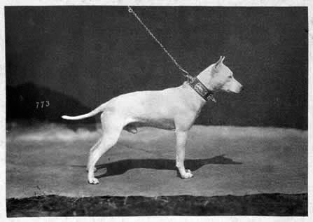 'Victor III', shown by Walter Potts at the Internationale Ausstellung von Hunden aller Racen zu Hannover Date: 1879
