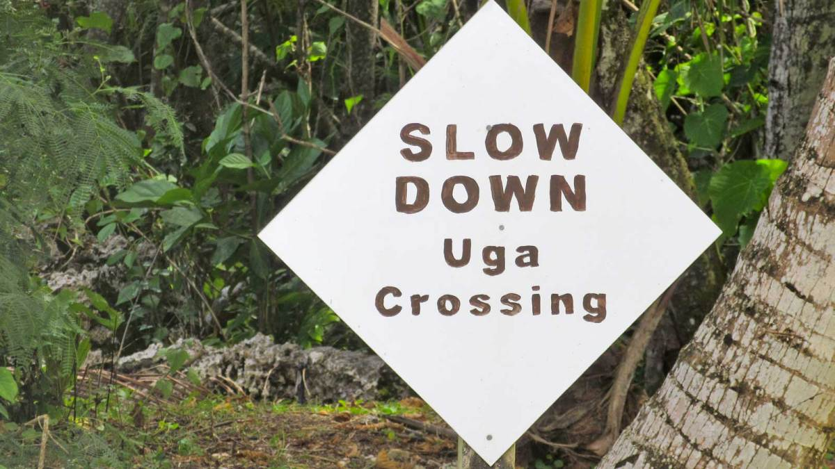 niue-uga-crossing-sign