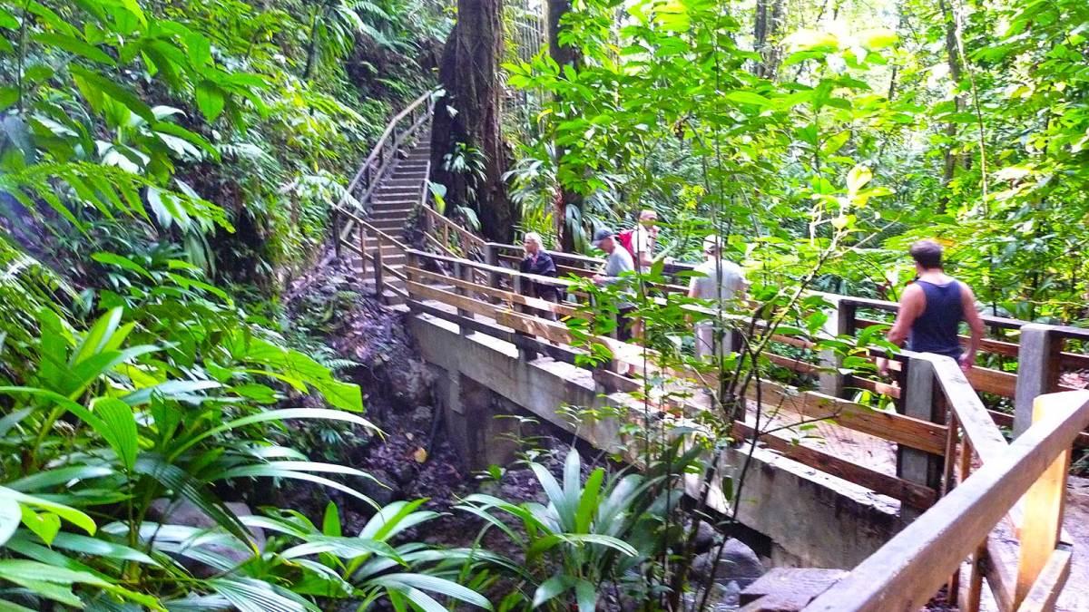 dominica_rainforest-walkway