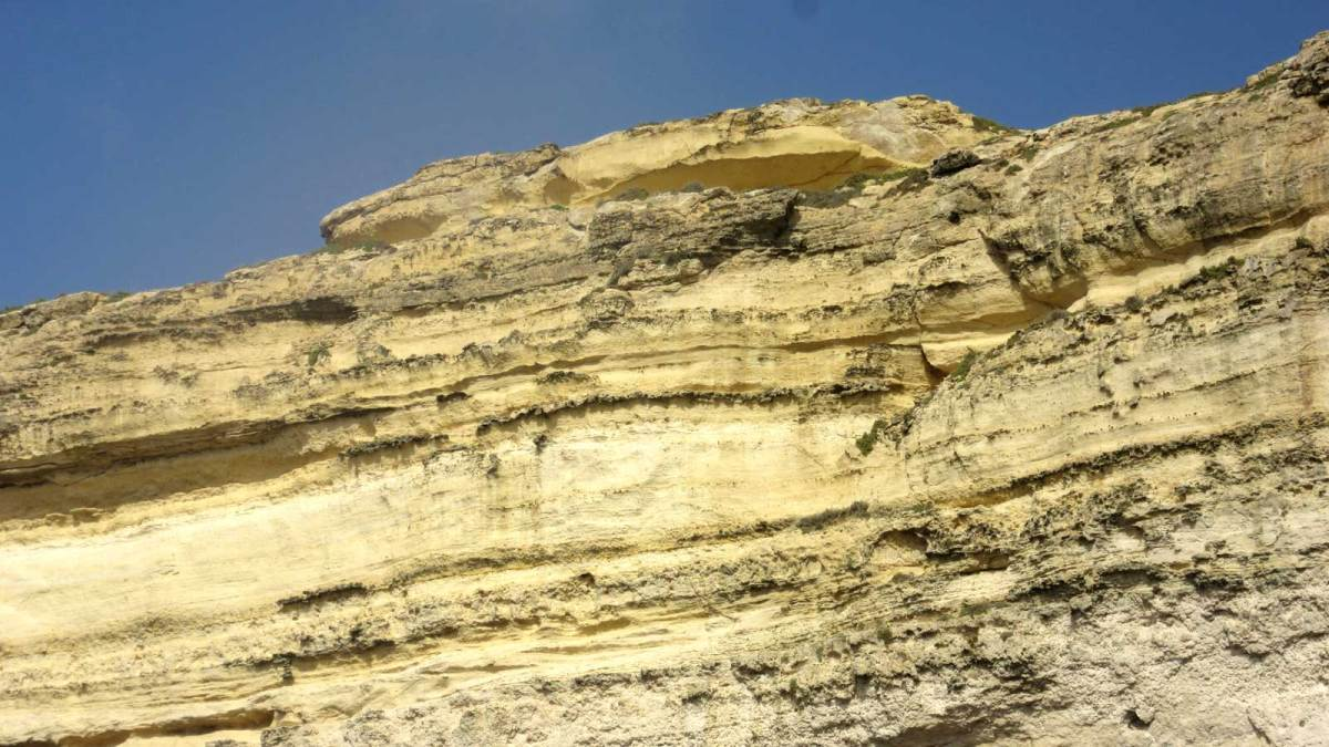 gozo_crocodile-rock