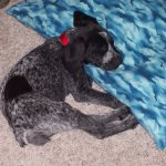 This is me at 8 weeks old.  C'mon say it...I was such a cute puppy.
