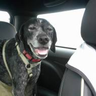 The car ride up. See my smile? Do I look like I have to poo?
