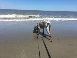 Beach 1st Time