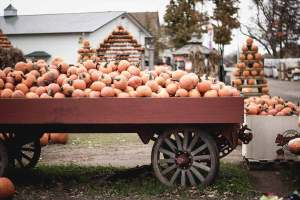 Oil Ranch Pumpkin Patch & Scarecrow Festival @  Oil Ranch | Hockley | Texas | United States