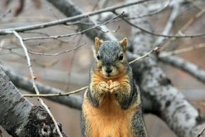 critter's christmas photo of squirrell out in winter weather