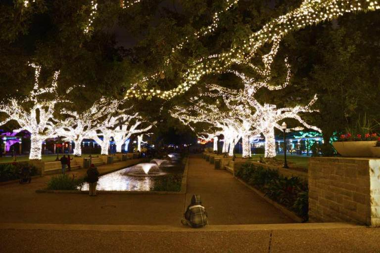 Little boy sitting in front of a reflecting pool looking at oak trees strung with white lights at the Houston Zoo