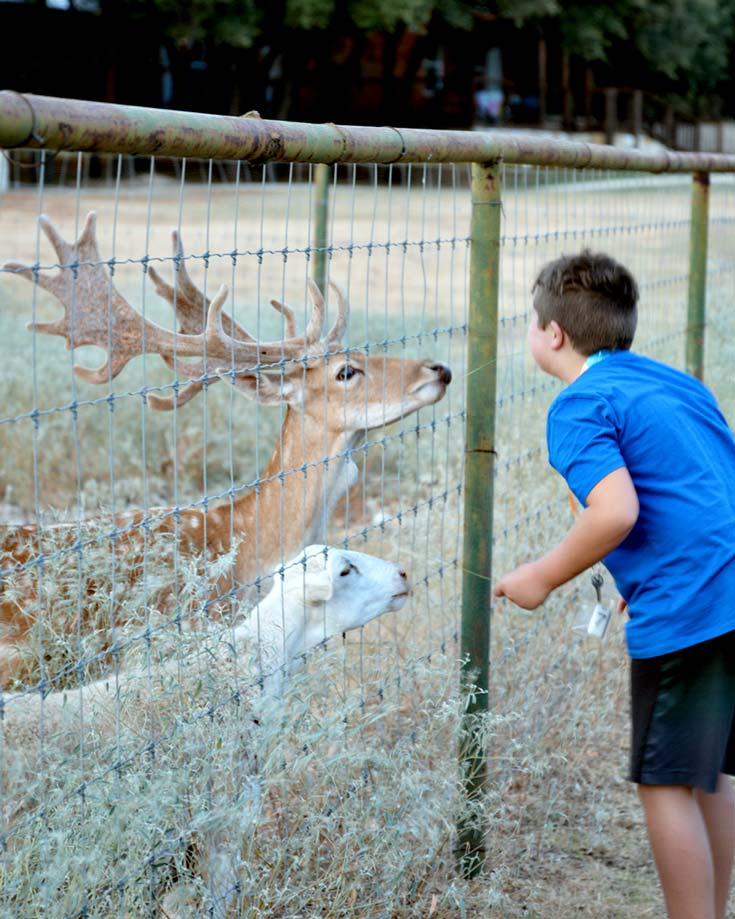 Ultimate Texas Hill Country Roadtrip with Kids   The Exotic Resort Zoo #texas #hillcountry #travelwithkids #roadtrip
