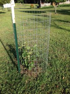 Protecting Plants From Deer - Fenced Tree
