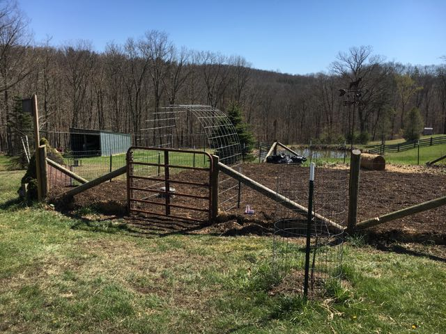 My Sheet Mulching Project on the Farm