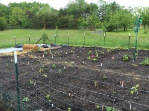 Sustainable Homesteading in West Virginia