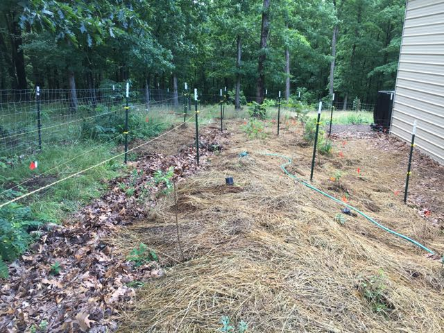 Food Forest Update