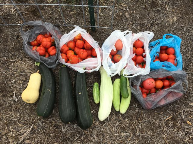 End of Summer Sustainable Homesteading Update