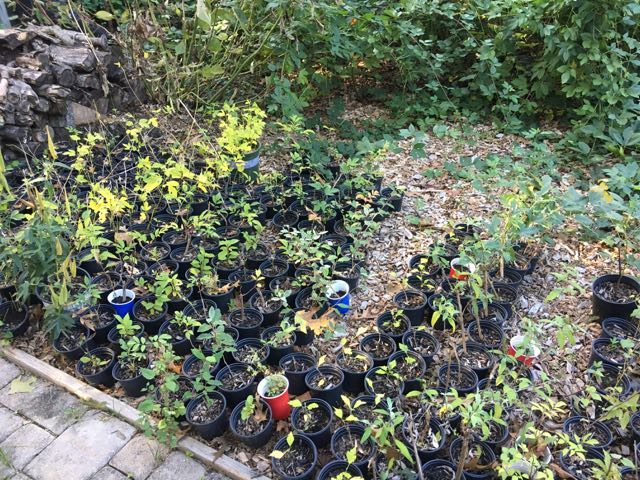 Backyard Nursery Propagation Bed Winterization