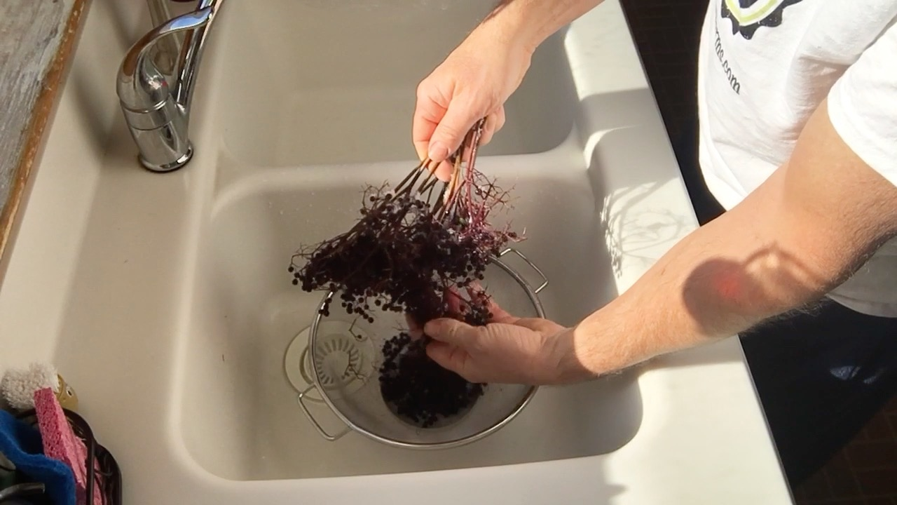 Preparing Elderberries for Recipes