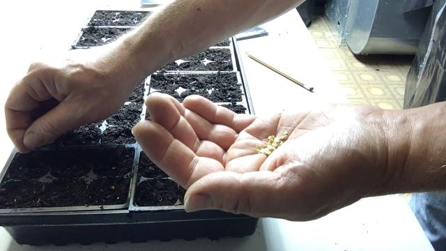 Seed Starting Indoors to Save Money seeds