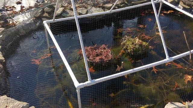 Sustainable Homesteading in Maryland Part 1 - Fish Pond