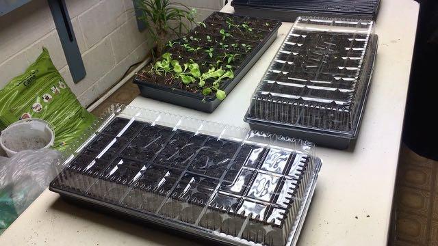 Indoor Plantings Update - Seeds