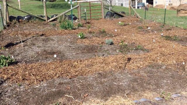 Sustainable Homesteading in WV Spring 2017 - Garden