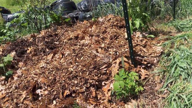 Food Forest Weeding - Mulch
