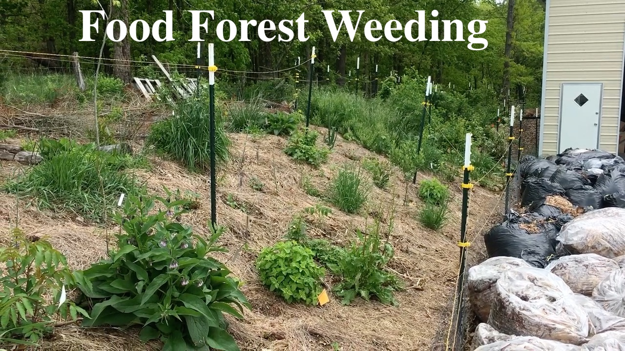 Food Forest Weeding or Forest Garden Weeding