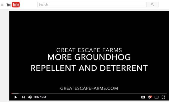 More Groundhog Repellent and Deterrent - Video