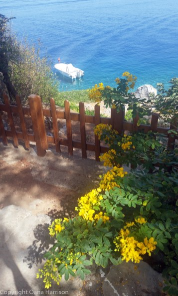 20170919-Hydra_Idra_YellowFlowersAndBoat