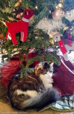 20171217-kitty2