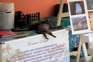 Cats napping at boat tour sign