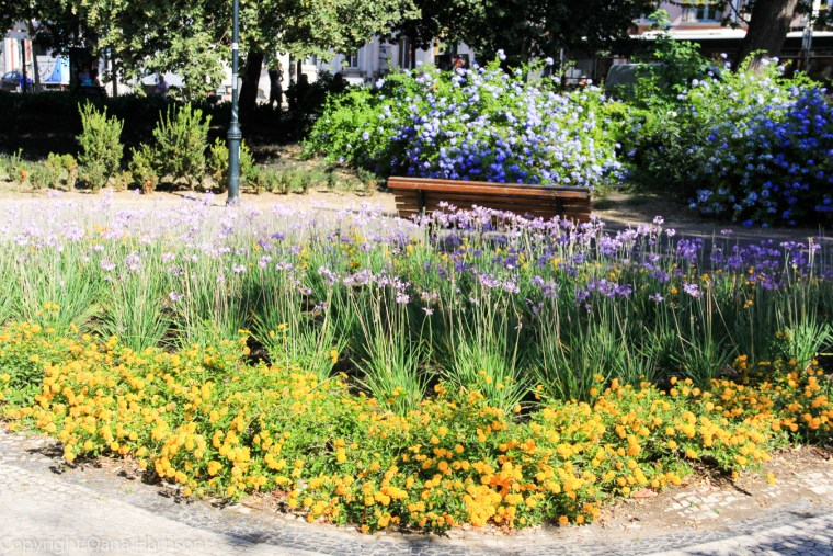 Flowers in Lisbon park