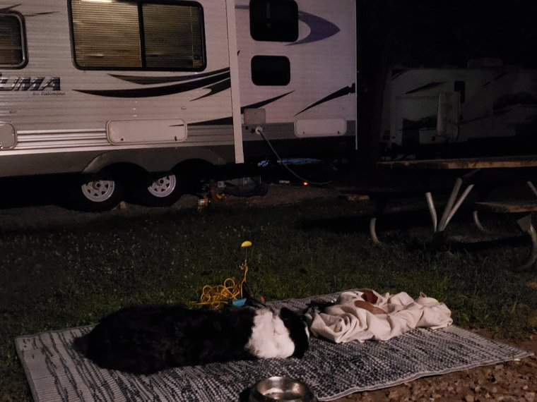Dogs-relaxing-at-CERAland-park-Indiana-RV