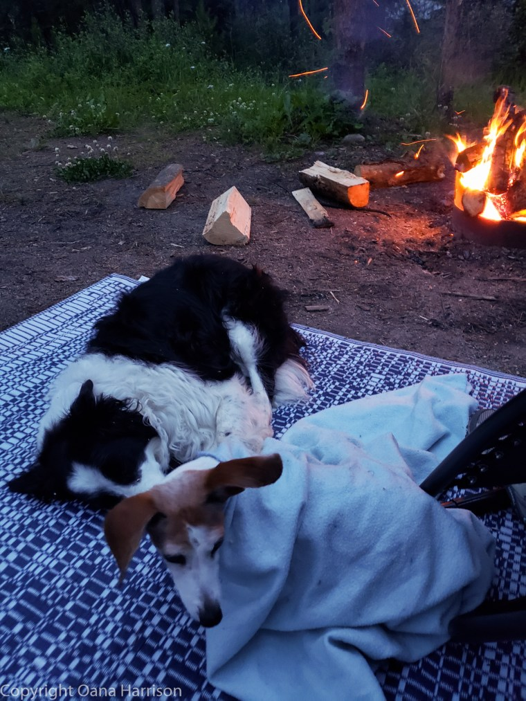 Puppies-sleeping-by-the-fire-Wabasso-Jasper-Canada