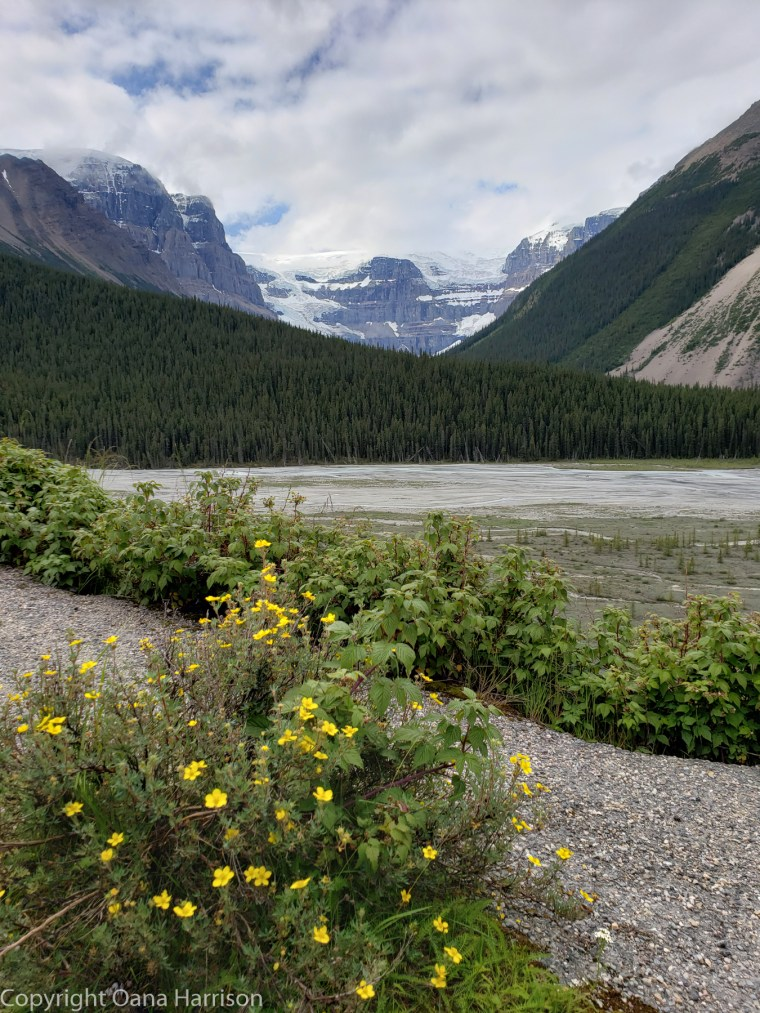 Mountains-and-flowers-Jasper-Canada
