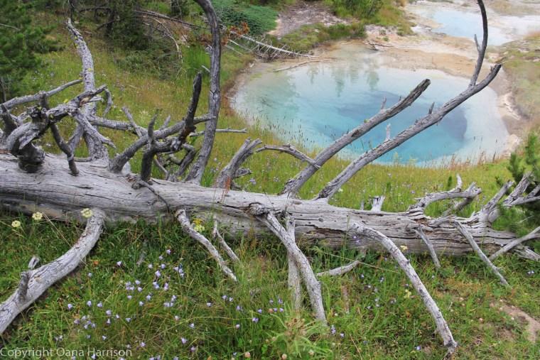 Bluebell-pool-geyser-Yellowstone