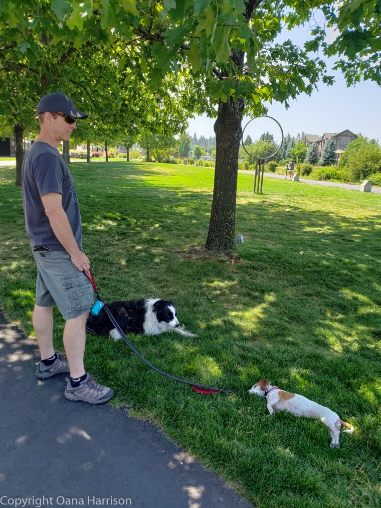 Oregon-Bend-Old-Mill-District-man-dogs-park